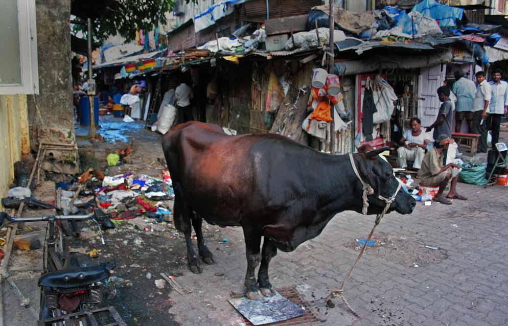 mumbai bull
