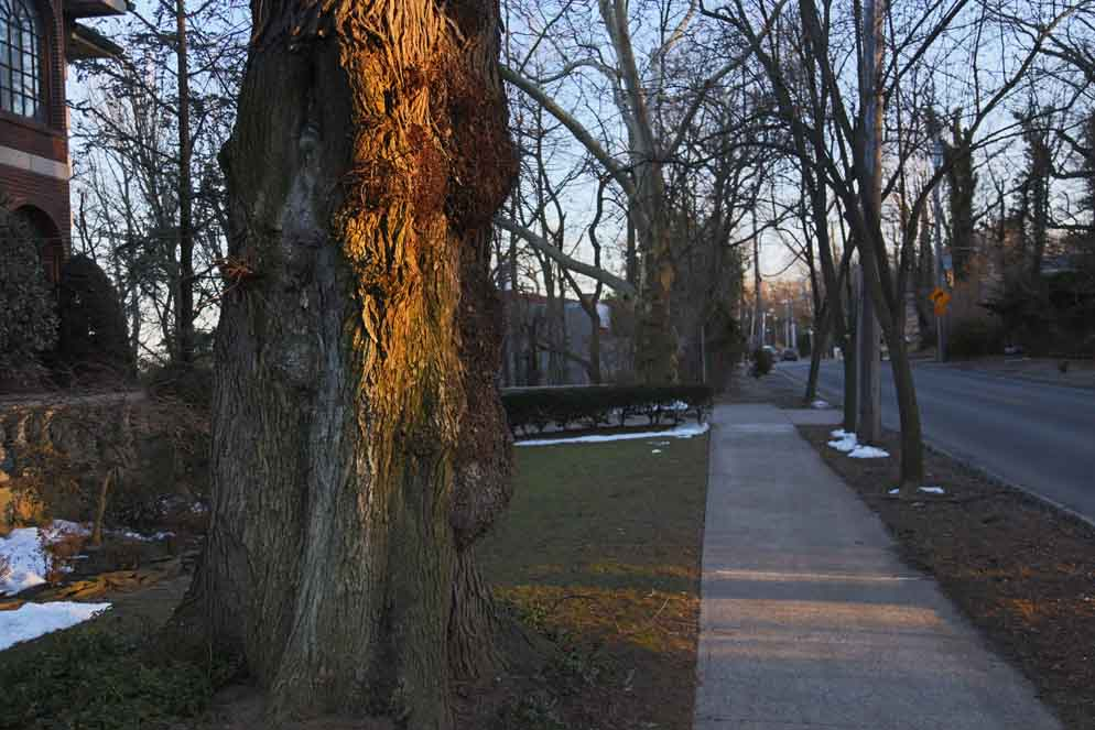 Staten tree